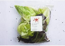 Salada-Todo-Dia