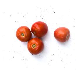 Tomate-Italiano-1