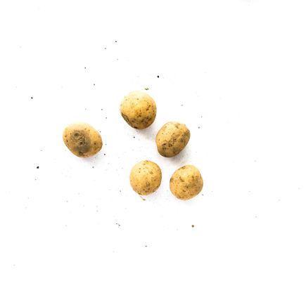 raizs-17042016-10