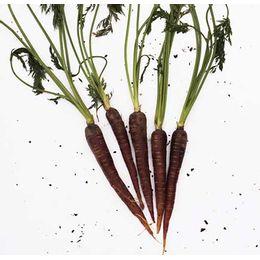cenoura-roxa-comp