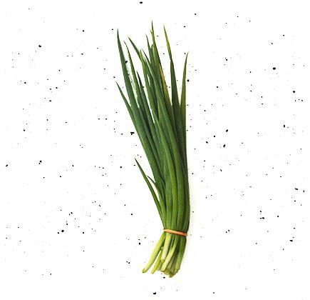 Cebolinha-Organica-Maco---Raizs