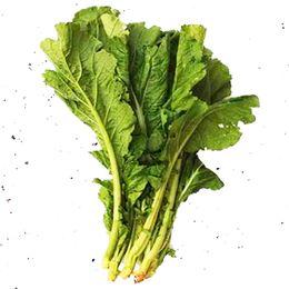 Mostarda-Verde-Organica-Maco---Raizs
