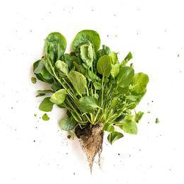 Agriao-Organico-Maco---Raizs