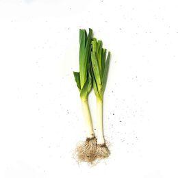 Alho-Poro-Organico--250g---350g----Raizs