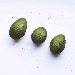 Avocado-Organico--500g---600g----Raizs