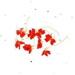 Capuchinha-Organica-BDJ---Raizs