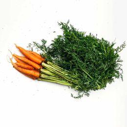 Cenoura-Organica--500g---600g----Raizs