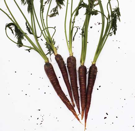 Cenoura-Roxa-Organica--500g---600g----Raizs