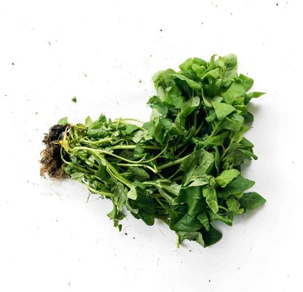 Espinafre-Organico-Maco---Raizs