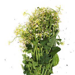 Flor-de-Nabo-Organica-Maco---Raizs