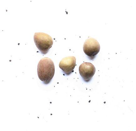 Kiwi-Organico--400g---500g----Raizs