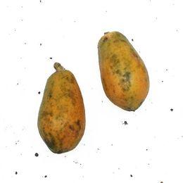 Mamao-Papaia-Organico-Unidade-600g---Raizs