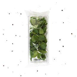Manjericao-Organico-Higienizado-20g---Raizs