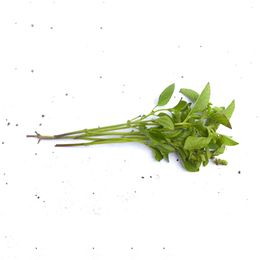Manjericao-Organico-Maco---Raizs