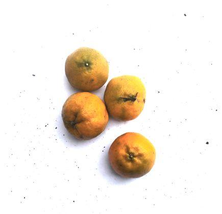 Mexerica-Poncan-600g-Organica---Raizs