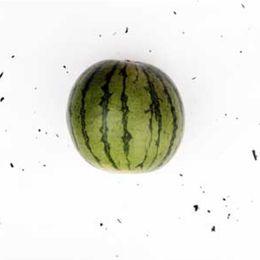 Mini-Melancia-Organica---Raizs