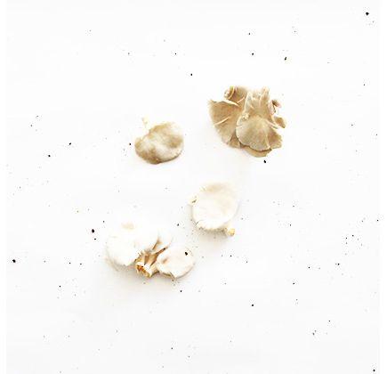 Cogumelo Pleurotus Branco Orgânico 200g