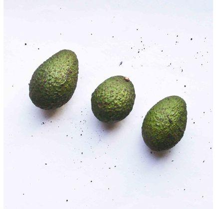 Avocado Orgânico (500g - 600g) - Raízs